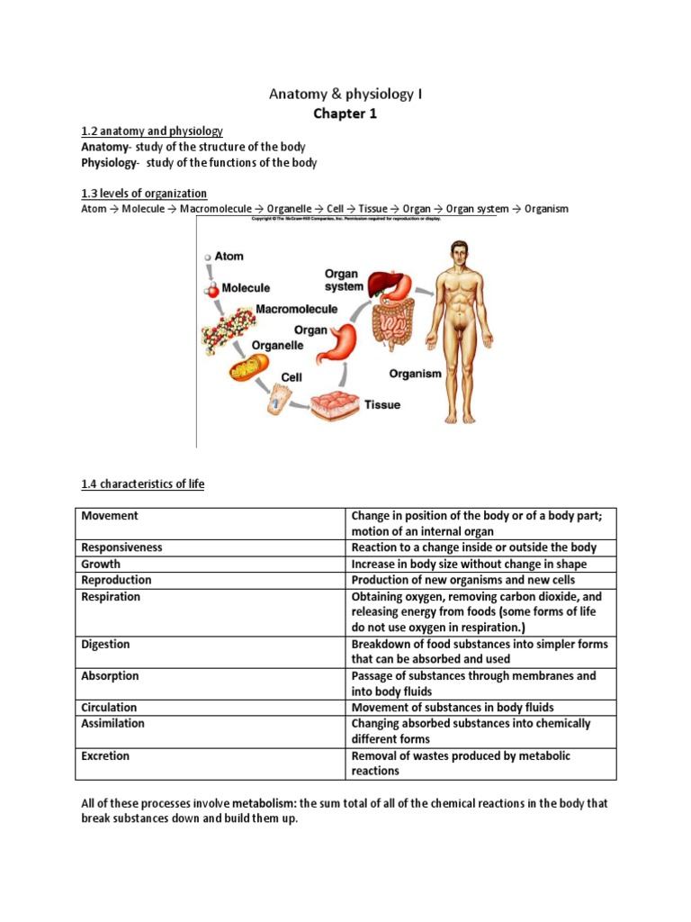 anatomy and physiology energy metabolism Essentials of anatomy & physiology2 nd edition chapter 1 the study of anatomy and physiology 62 bone development and metabolism.