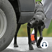 """Mini Pod: What is Nosework?: Does your dog """"need a job""""? Wondering what this sport is about? Interested but not sure? If you have a dog, you need to find out about Nosework, the fastest growing dog sport. This Mini Pod is targeted at all dog owners, whether you do sports or not...."""