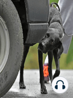 What can be learned from K9 Narcotics handling?