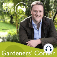 Gardeners' Corner in the Autumn Garden: Gardeners' Corner in autumn - harvesting produce, making leaf mould and planning ahead.