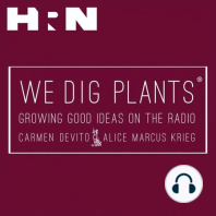 Episode 144: Horticultural Time Travel: Get in the Thanksgiving spirit by traveling in time on a brand new episode of We Dig Plants! Carmen DeVito and Alice Marcus Krieg are joined by Kirk Ryan Brown, Vice President of the Garden Writers Association, who channels the legendary John Bartram and