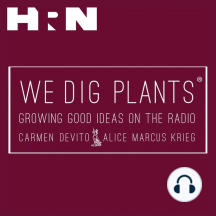 Episode 69: Weeds: Richard Mabey visits We Dig Plants this week to discuss his new book titled Weeds. Richard explores the vast history of these undesirables found in almost every garden and farm by planters around the world. From archeological seeds to ground elder to bind