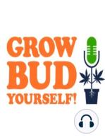 Free Weed – Episode 33
