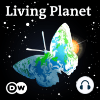 Living Planet: Bringing home a different kind of bacon