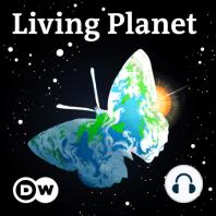 Living Planet: Diving deep