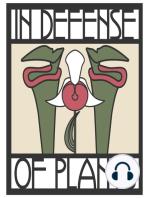 Ep. 210 - Pitcher Plants