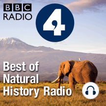 Saving Species - 22 Jan 13: Bonobos & Dragon Trees: Ep21 of 24: This week Saving Species looks at Bonobos - a great ape, related to and in...