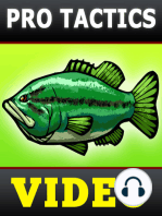 Fall Bass Fishing Tactics