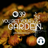 What you need to know if you plan on starting your own plants from seeds this season!: Looking to plant some seeds this season? On this episode of You Bet Your Garden, our host Mike McGrath explains how to produce starts that are better than what you'll find at home and garden centers! As always, Mike takes your fabulous phone call questio...