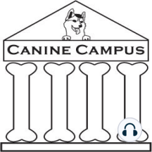Canine Campus #12: Leash Aggression: How to accurately identify and change on-leash aggression, why it happens and practical solutions.