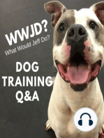 Dog Training Q&A