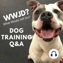 Dog Training Q&A: Dog Training Q&A