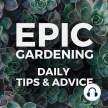 3 Common Garden Planning Mistakes: 2020 is upon us...how is your garden plan going? Before you sit down and sketch out how you want your garden to look this year, let's go over a few mistakes many beginners make! Buy Birdies Garden Beds Use code EPICPODCAST for 10% off your first order...
