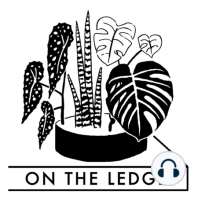 Episode 114: houseplants and sustainability part two - the nursery trade: I talk to Dave Hanson of Sage Garden Greenhouses to find out the challenges of trying to grow sustainable houseplants