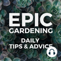 Why You Should Grow Fruit: As an annual veggie gardener primarily, I confess I haven't grown as much fruit as I'd like. Mostly due to space. But Nancy makes a compelling case for growing your own fruit in today's show! About Nancy Hayden: Nancy and her husband John are the...