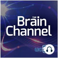 Building a Better Helmet: Brainguard: UC Berkeley News