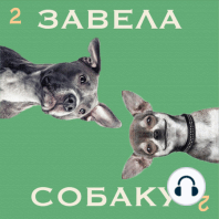 Серия пятая — поход к ветеринару