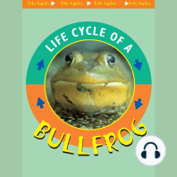 Life Cycle of a Bullfrog