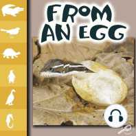 From an Egg
