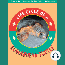 Loggerhead Turtles: Life Science - Life Cycles