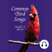 Common Bird Songs