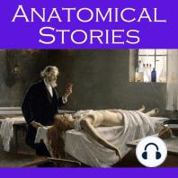 Anatomical Stories