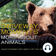 NPR Driveway Moments More About Animals