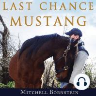 Last Chance Mustang
