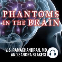 Phantoms in the Brain