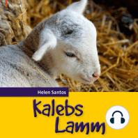 Kalebs Lamm