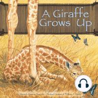 A Giraffe Grows Up
