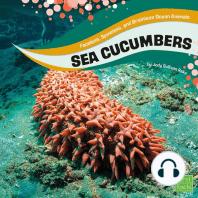 Sea Cucumbers