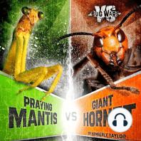 Praying Mantis vs. Giant Hornet