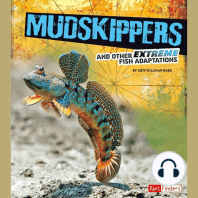 Mudskippers and Other Extreme Fish Adaptations