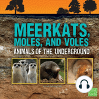 Meerkats, Moles, and Voles