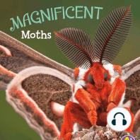 Magnificent Moths