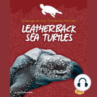Leatherback Sea Turtles