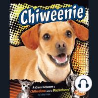 Chiweenie