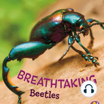 Breathtaking Beetles