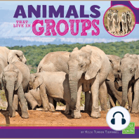 Animals That Live in Groups