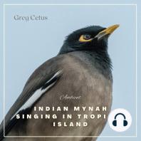 Indian Mynah Singing in Tropical Island