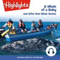 A Whale of a Baby and Other Real Whale Stories