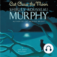 Cat Chase the Moon