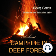 Campfire In Deep Forest
