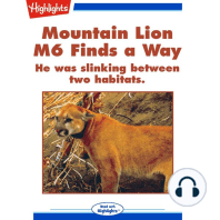 Mountain Lion M6 Finds a Way