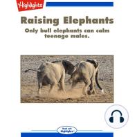 Raising Elephants
