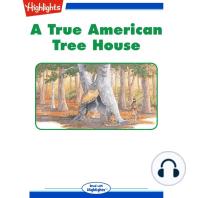 A True American Treehouse