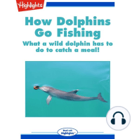 How Dolphins Go Fishing