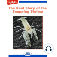The Real Story of the Snapping Shrimp
