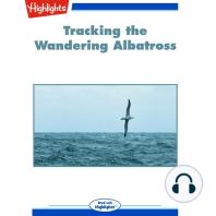 Tracking the Wandering Albatross
